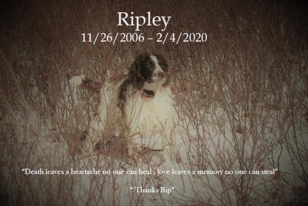 Ripley Memorial